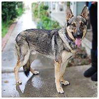 Adopt A Pet :: RANGER - Glendale, CA