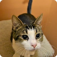 Adopt A Pet :: BJ - Michigan City, IN