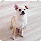 Adopt A Pet :: Bora