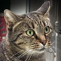 Adopt A Pet :: MINDY - Toledo, OH