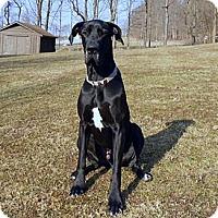 Adopt A Pet :: Otis - Pearl River, NY