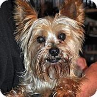 Adopt A Pet :: Oliver - Redding, CA