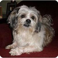 Adopt A Pet :: Nelson - Mooy, AL