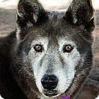 Adopt A Pet :: GRAY - Phoenix, AZ