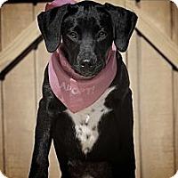 Adopt A Pet :: Cassie - Albany, NY