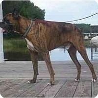 Adopt A Pet :: Atticus - Brunswick, GA