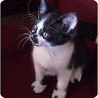 Adopt A Pet :: Clark Kent - Brea, CA