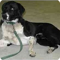 Adopt A Pet :: Bradford - Wahoo, NE