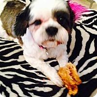 Adopt A Pet :: Butterscotch - Canoga Park, CA