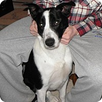 """Adopt A Pet :: Slyde """"I've Been Adopted"""" - Minerva, OH"""
