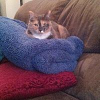 Adopt A Pet :: Stormy - Lyndora, PA