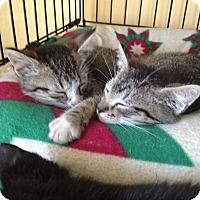 Adopt A Pet :: Gabriel & Seth - Island Park, NY