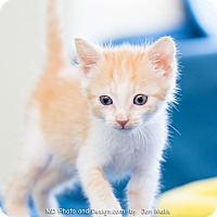 Adopt A Pet :: Max - Fountain Hills, AZ