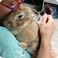 Adopt A Pet :: Sunshine - Woburn, MA