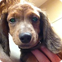 Adopt A Pet :: Skipper - Fairview Heights, IL
