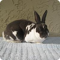 Adopt A Pet :: Antonio - Bonita, CA