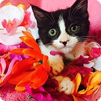 Adopt A Pet :: Abbee - Cerritos, CA