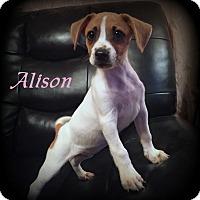 Adopt A Pet :: Alison - Denver, NC