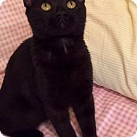 Adopt A Pet :: Bamboo - Addison, IL