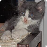 Adopt A Pet :: PIGGY - Maybrook, NY