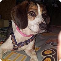 Adopt A Pet :: Juliet - WESTMINSTER, MD