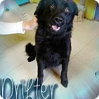 Adopt A Pet :: Drifter - Odessa, TX