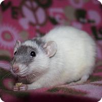 Adopt A Pet :: Ginny - Columbia, SC