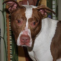 Adopt A Pet :: Kelly - Marietta, OH