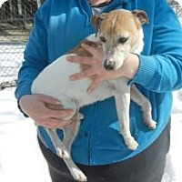 Adopt A Pet :: Spike - Antioch, IL