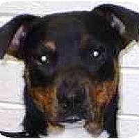 Adopt A Pet :: Finley - Gilbert, AZ