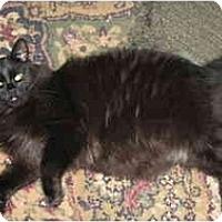 Adopt A Pet :: Ross - Clay, NY