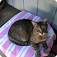 Adopt A Pet :: Casey - Sacramento, CA