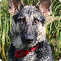 Adopt A Pet :: Clementine - Nashville, TN