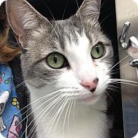 Adopt A Pet :: Michelle - Newport Beach, CA