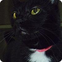Adopt A Pet :: Anika - Hamburg, NY