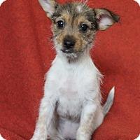 Adopt A Pet :: Salsa - Winters, CA