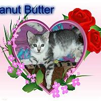 Adopt A Pet :: Peanut Butter - Putnam, CT