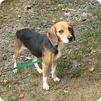 Adopt A Pet :: Olivia - Dumfries, VA