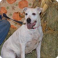 Adopt A Pet :: Paisley - Lima, OH