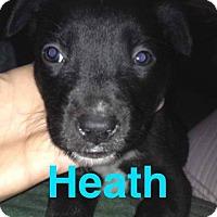 Adopt A Pet :: Heath - Garden City, MI