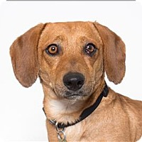 Adopt A Pet :: Gosling - San Luis Obispo, CA