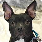 Adopt A Pet :: Maurice