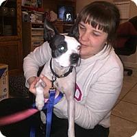 Adopt A Pet :: Batman - Weatherford, TX