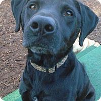 Adopt A Pet :: Kalani Maui Maui - Issaquah, WA