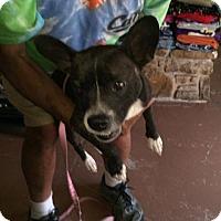 Adopt A Pet :: Joy - Weatherford, TX