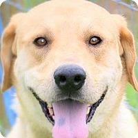 Adopt A Pet :: KENO(OUR