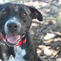 Adopt A Pet :: Amabel - Salt Lake City, UT