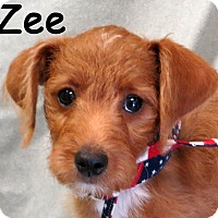 Adopt A Pet :: Zee - Warren, PA