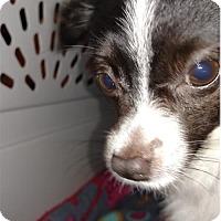 Adopt A Pet :: Boris - Akron, OH