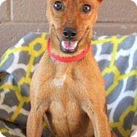 Adopt A Pet :: Lulu - Summerville, SC